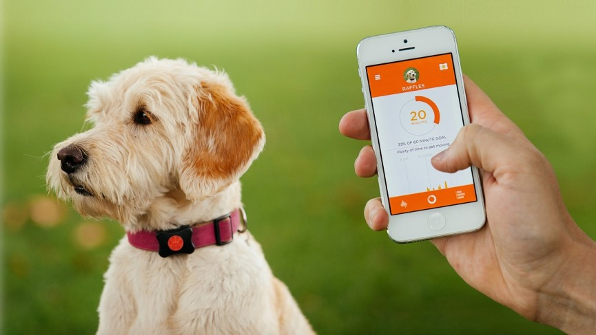 collari satellitari GPS per cani